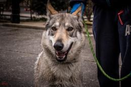 fuerza_canina-5